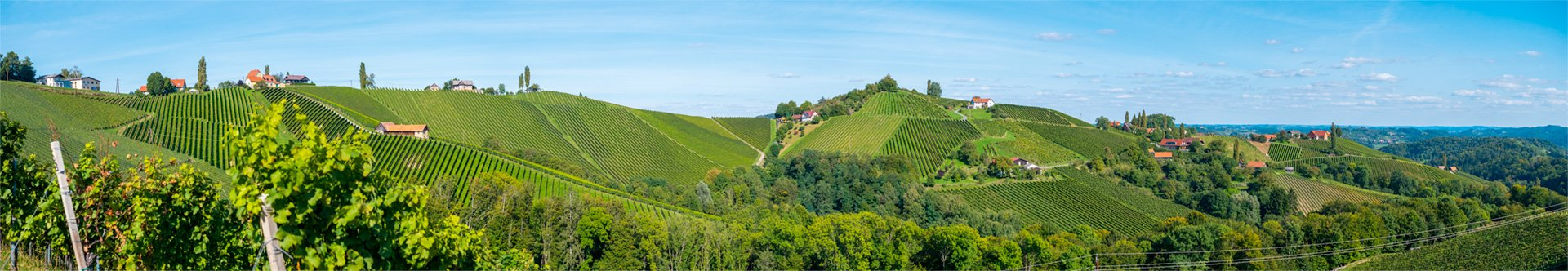 Vineyards in southern Styria, Austria in late summer