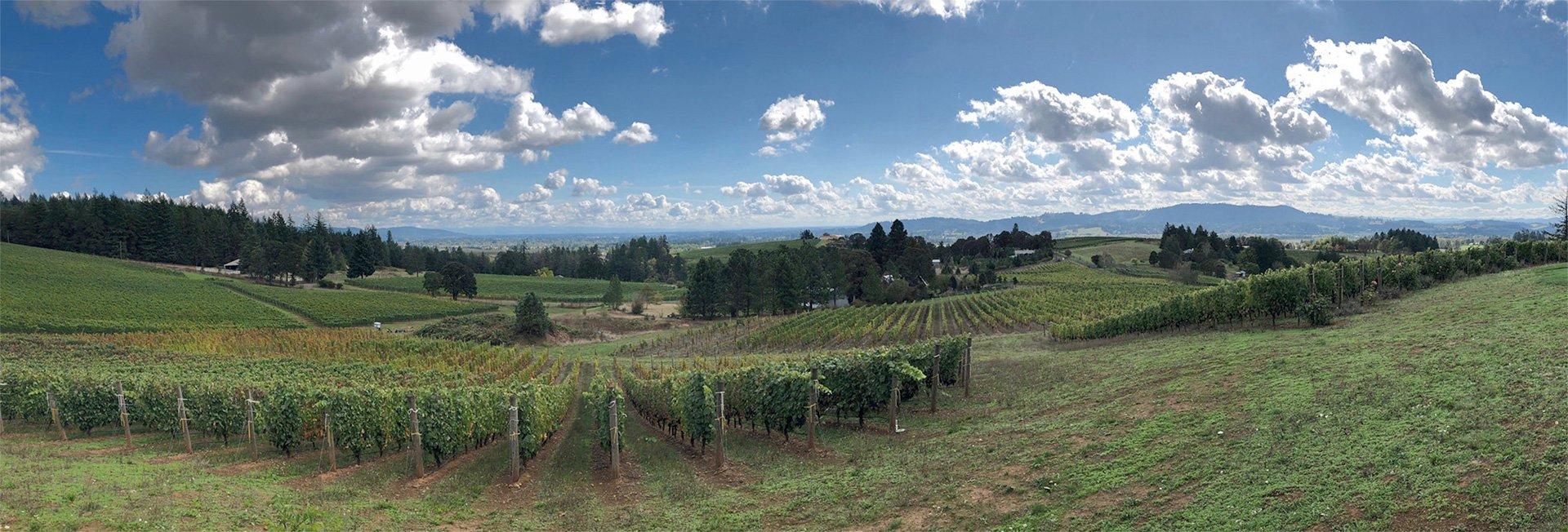 Willamette Valley Vista