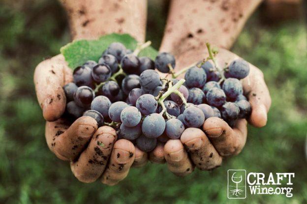 Craft Wine Association Webinar