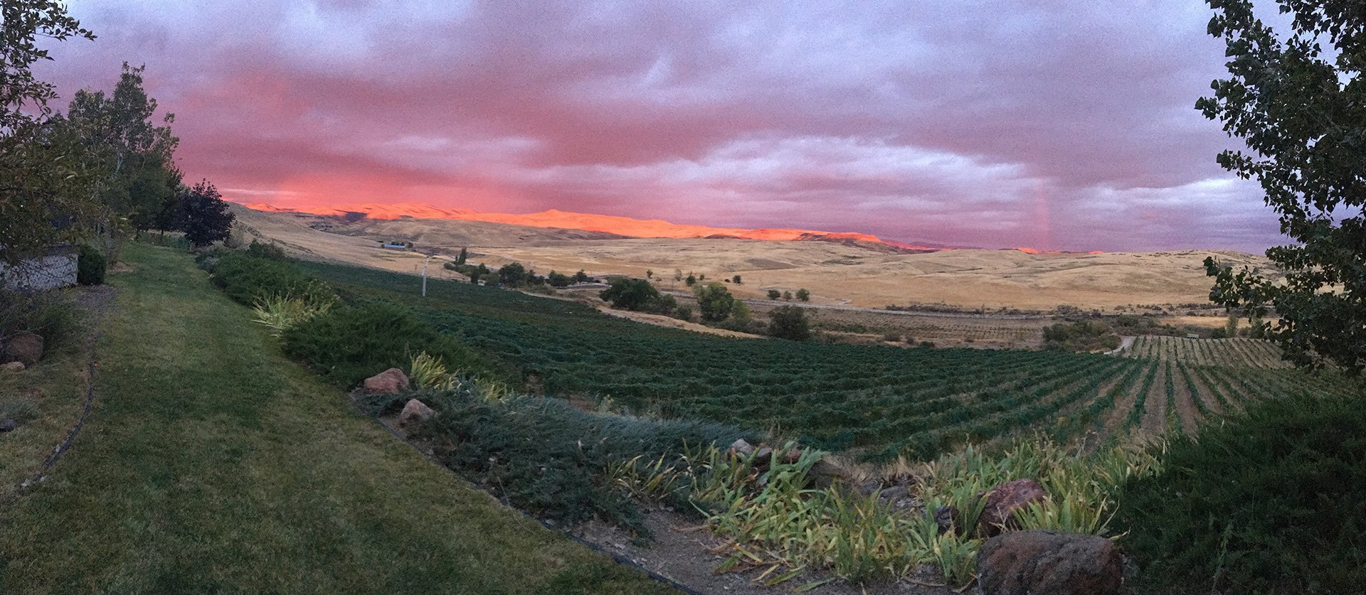 Idaho VIneyard Sunset by Cori Solomon